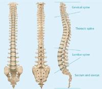 chiropractors-margate-spine
