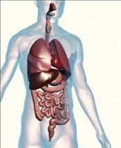 digestive-health-margate